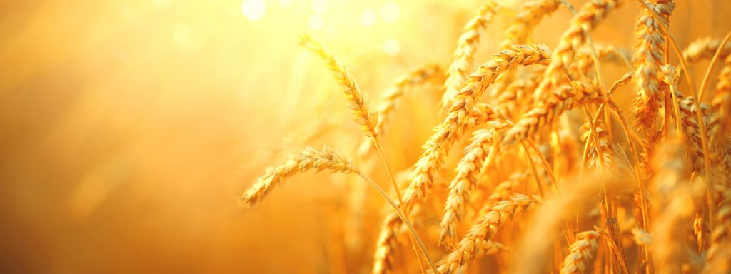 are whole grains good for you